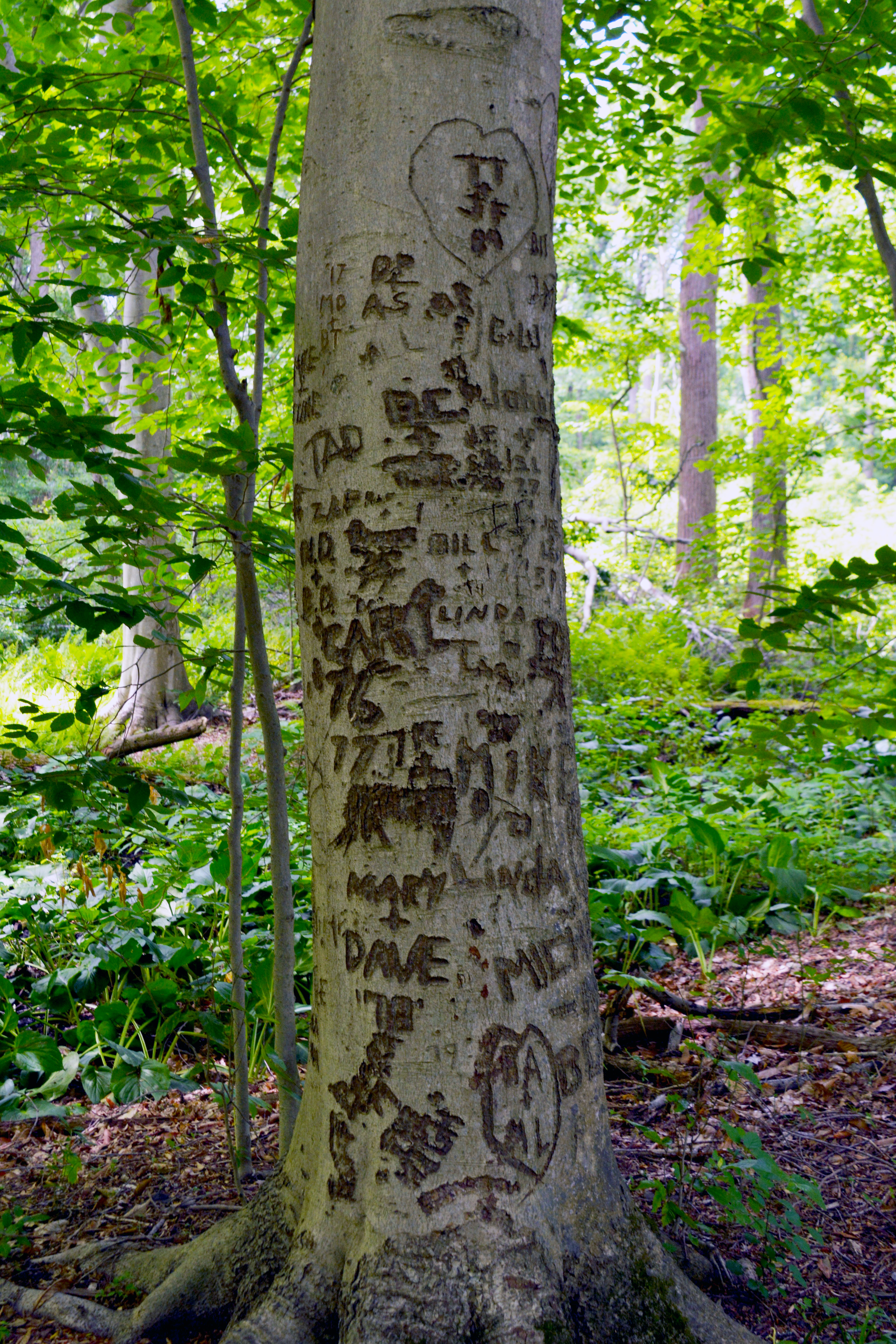 Tree with names carved into it