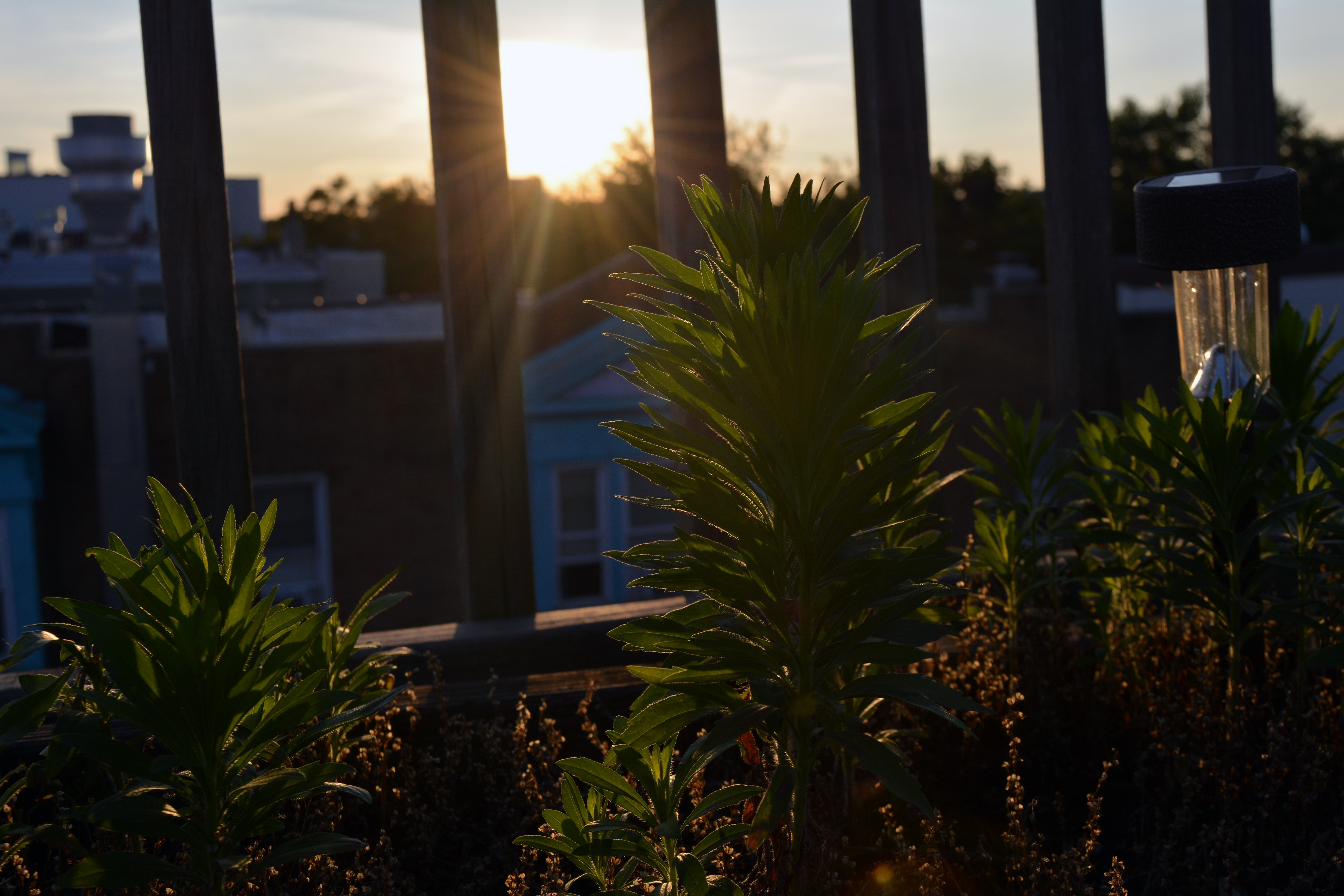 Plants with the sunset in the background