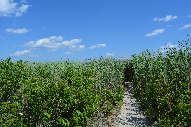A path through tall grass to the beach