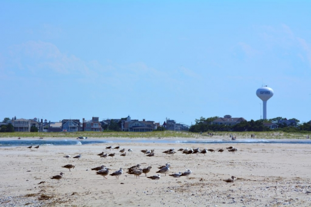 Seagulls on the beach in the foreground with beach houses in the background