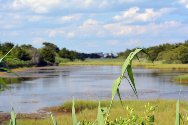 A Pond at Corson's Inlet State Park