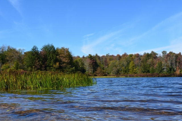 Lake at Ricketts Glen State Park with grass and fall colors
