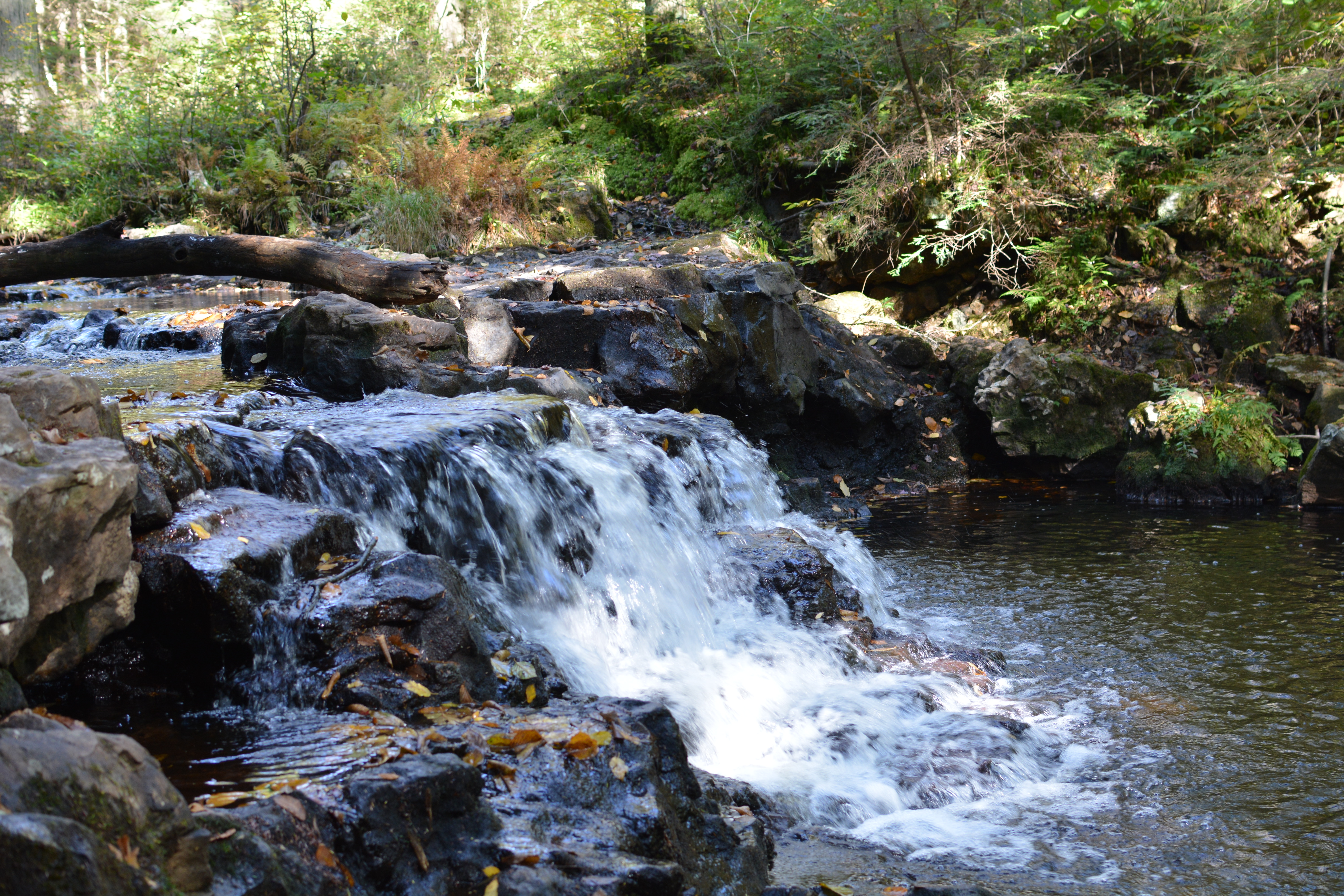 A waterfall at Ricketts Glen State Park