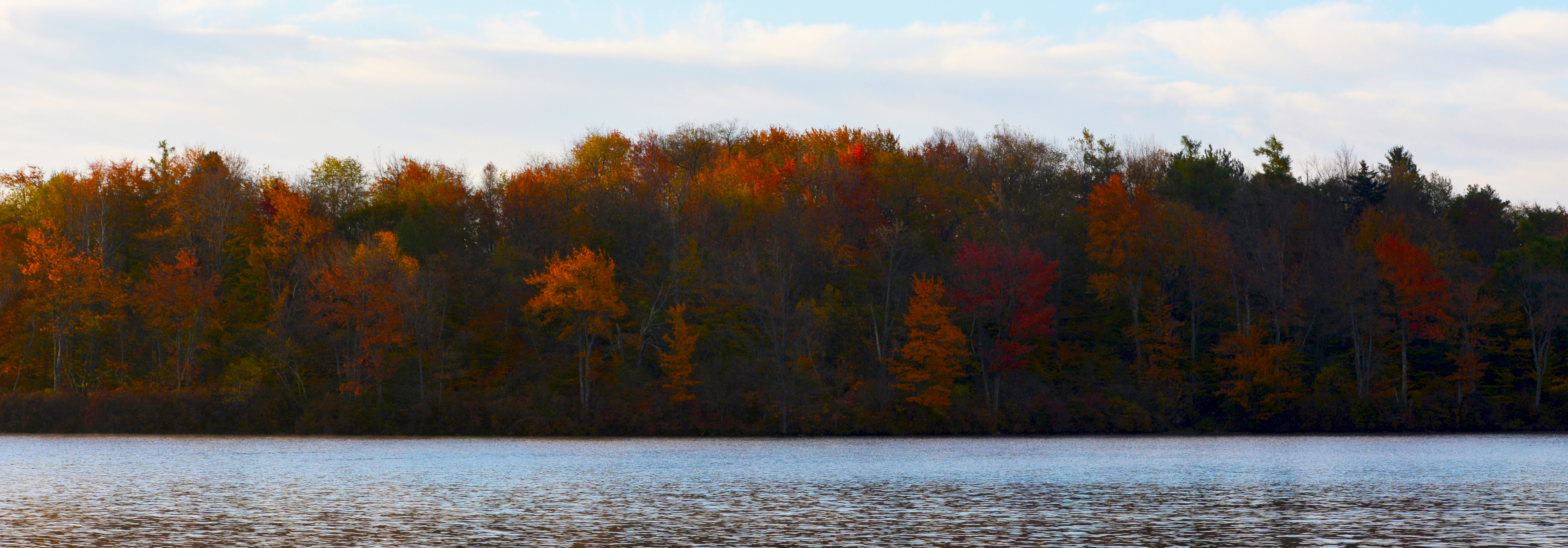 Trees in the fall across a lake