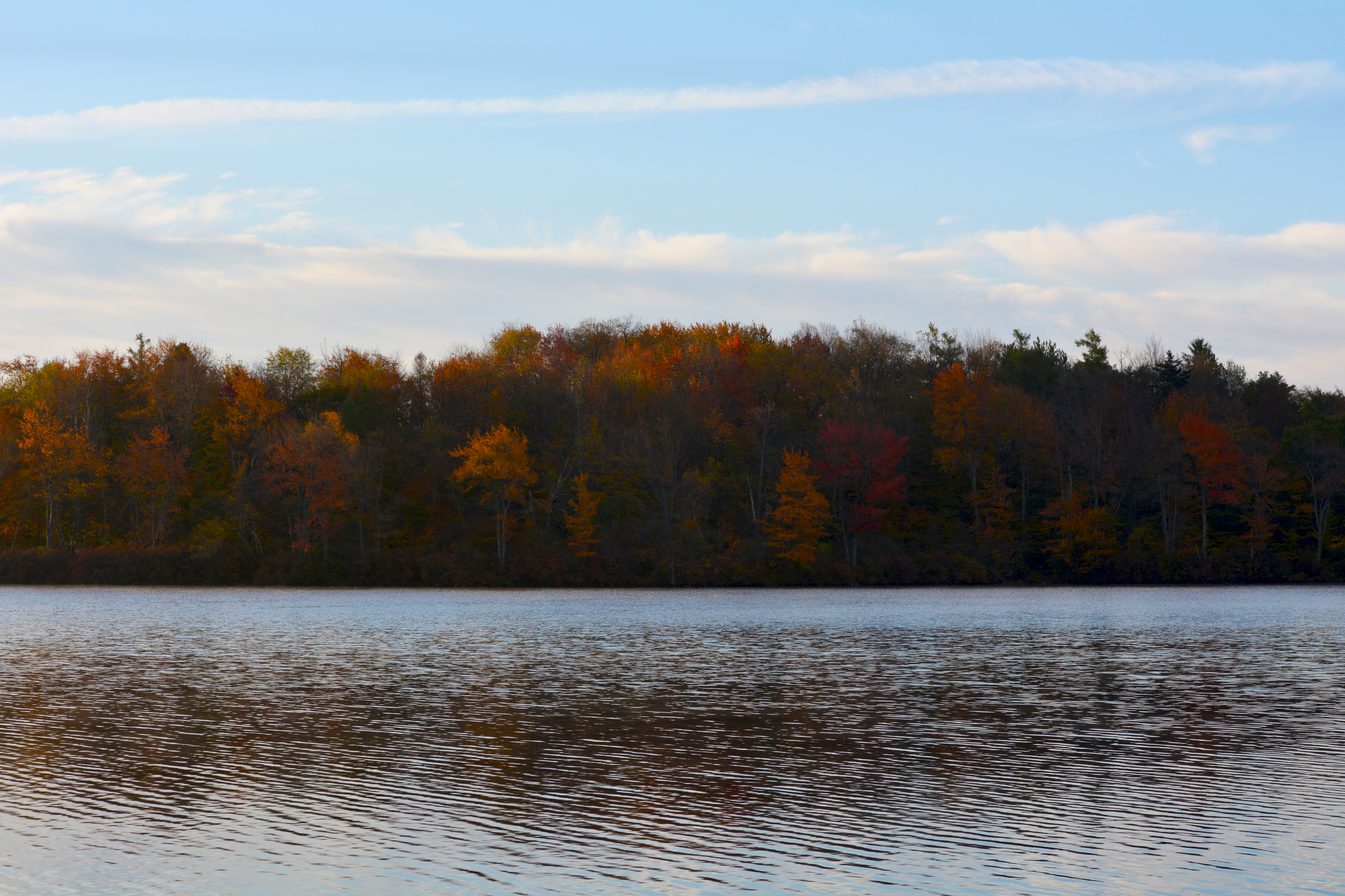 Colorful trees in the fall at Tobyhanna State Park