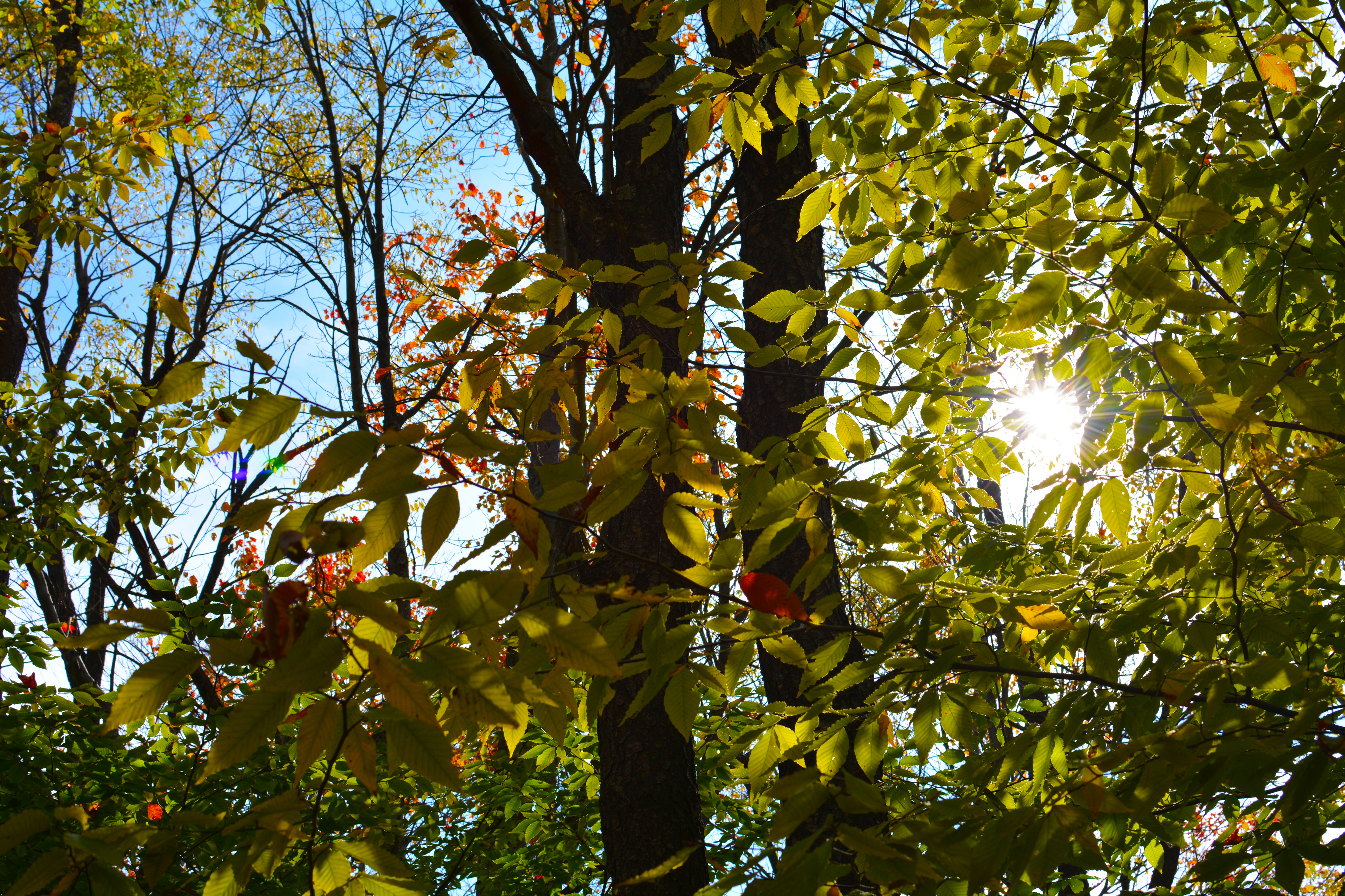 The morning sun shines through the trees at Tobyhanna State Park