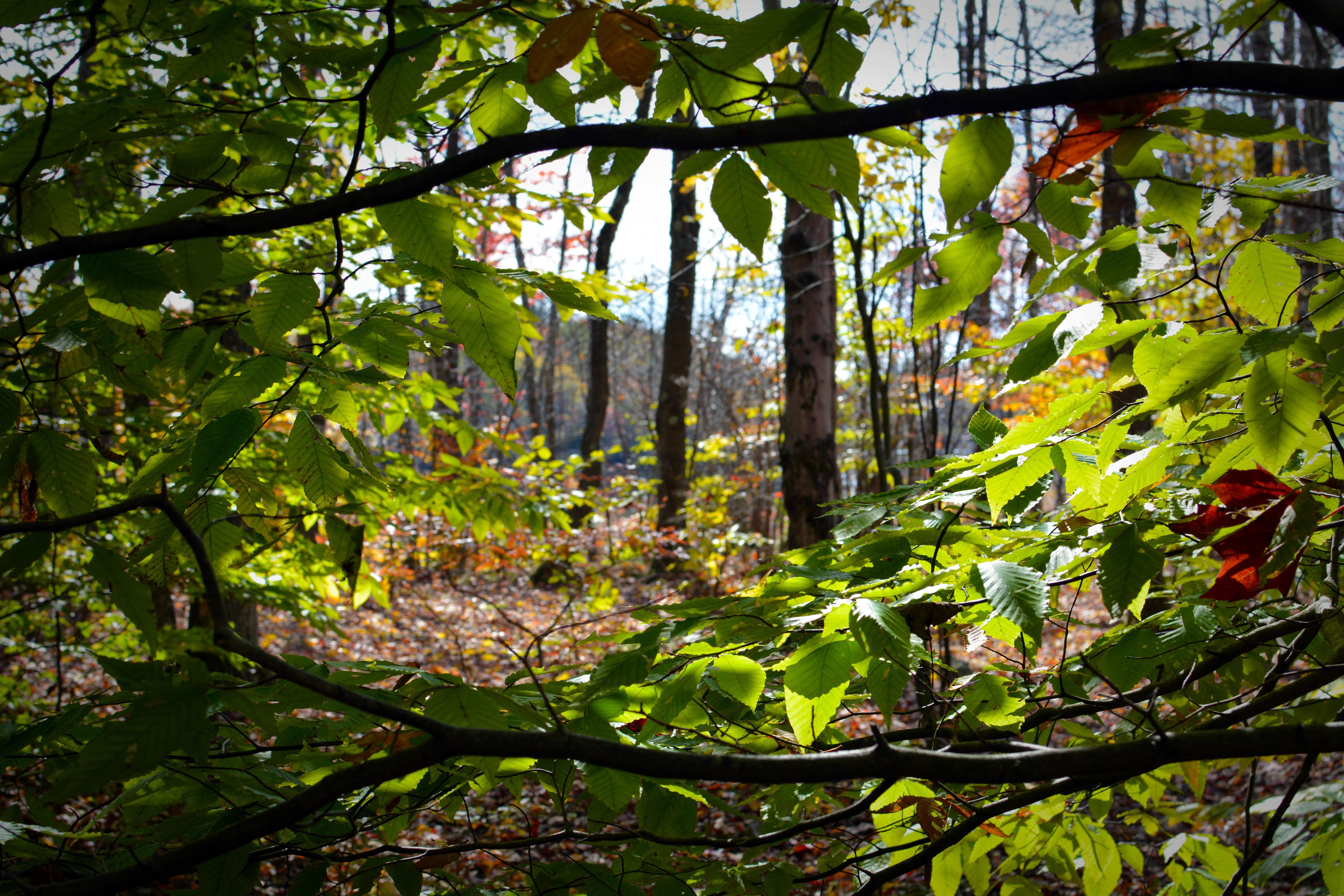 The forest at Tobyhanna State Park framed by trees in the fall