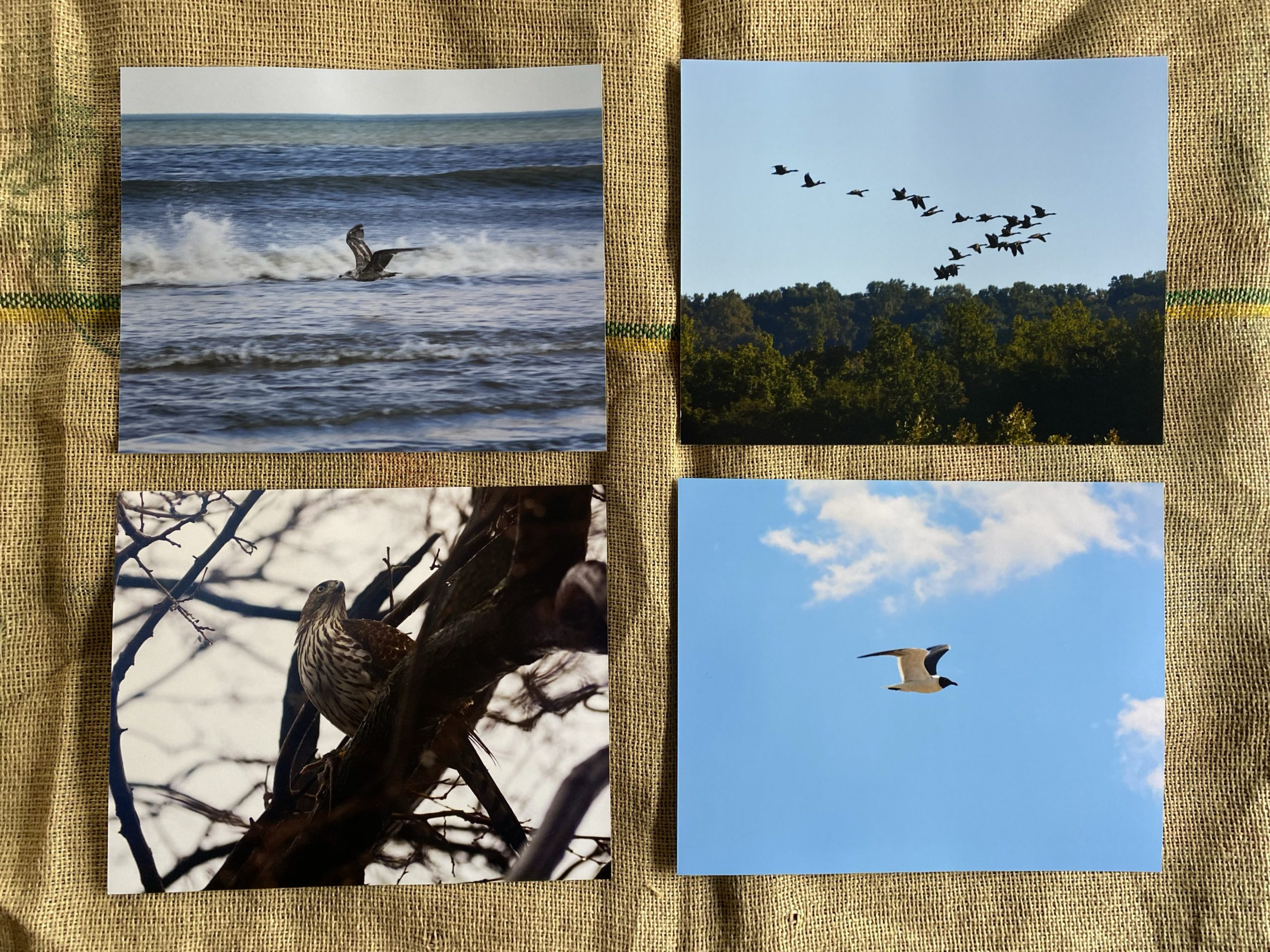 Birds by Bird Prints